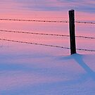 Winter Snow Sunset Pink Blue Fence by Jamie Roach