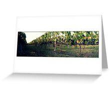 Greek vineyard Greeting Card