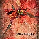 Merry Christmas (Pointsettias) by Scott Mitchell