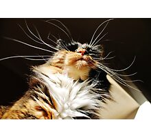 When Whiskers Wake Photographic Print