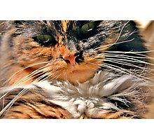 Don`t Call Me Tiddles! Photographic Print