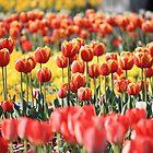 Fields of Flowers by NinaJoan