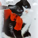 Xmas Kitten by ©The Creative  Minds