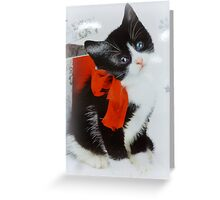 Kitten with red bow Greeting Card