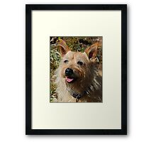 Doggie Smile Framed Print