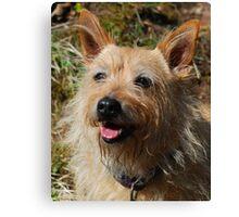 Doggie Smile Canvas Print