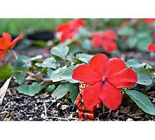 Red Ninja Petals Photographic Print