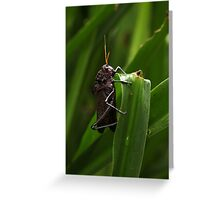 Grasshopper: after the rain Greeting Card