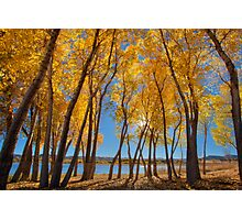 Skinny Fall - Wide Photographic Print