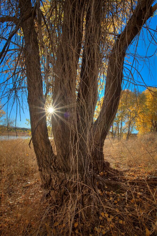 Tree Perspective 2 by Bob Larson