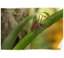 Grasshopper Poster