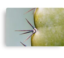 Cacti Spikes Canvas Print