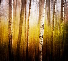 Magic Birch by KBritt