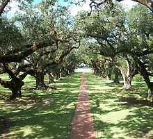 Alley of Oaks- Oak Alley Plantation by Forget-me-not