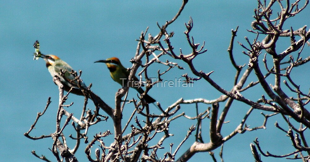 bee eaters and butterflys  by Trish Threlfall