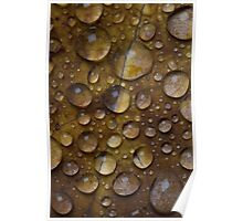 Fall Water Droplets Poster