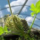 Caterpillar, Cox, Dayton, 2012 by Jason Franklin