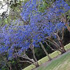 Purple Jacaranda Treeline by Fiona Allan Photography