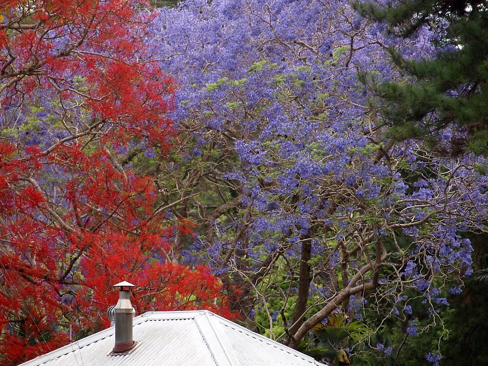 Jacaranda & Illawarra Flame Tree by Fiona Allan Photography
