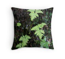 Ferns in the rain - France. Throw Pillow