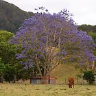 In the Paddock - Rural Jacaranda by Fiona Allan Photography