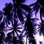 Sunset Palms by Kerry Purnell