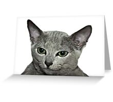Cats Greeting Card