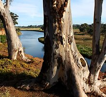 South Werribee - VIC by Emmy Silvius