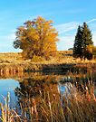 A Reflection of Fall by BettyEDuncan