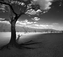 The Unforgiving Desert by Jill Fisher