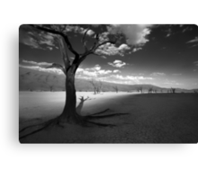 The Unforgiving Desert Canvas Print