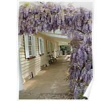 Woolmers Wisteria in Tasmania - A World Heritage Listed Site Poster