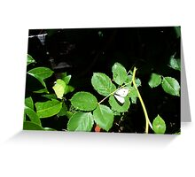 Cabbage Moth Three - 11 11 12 Greeting Card