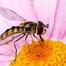 Native Bee. by trevorb
