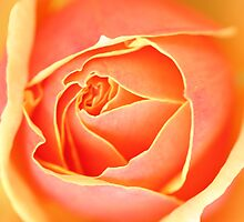 Melting Rose ~ a Flood of Color by SummerJade