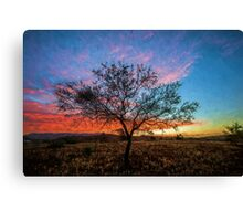 Outback Sunset (ED) Canvas Print