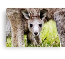 I have Eyes Only For You  ~ Joey Kangaroo ~ Canvas Print