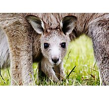 I have Eyes Only For You  ~ Joey Kangaroo ~ Photographic Print