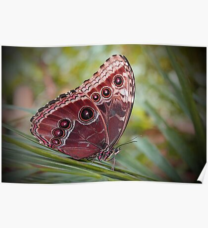Butterfly.. Poster