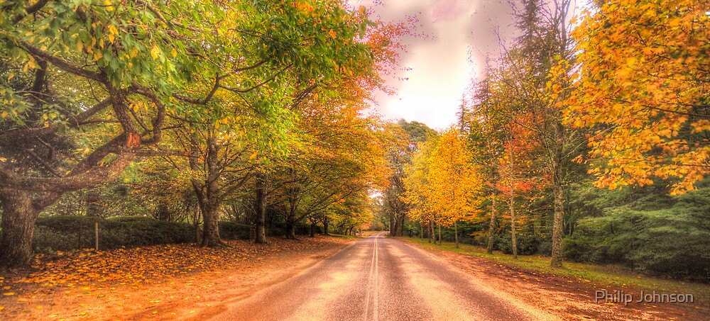 Walk Along The Avenue - Mount Wilson, NSW Australia - The HDR Experience by Philip Johnson