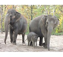 Elephant Family Photographic Print