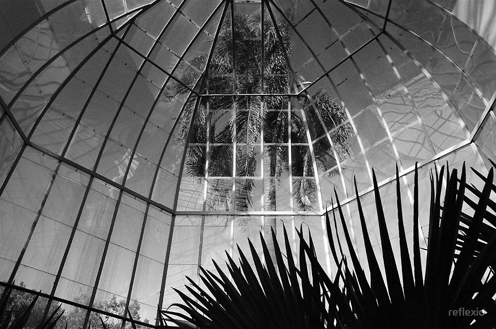 Palm House by reflexio