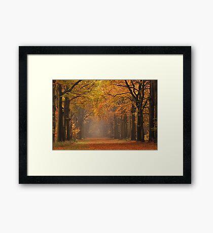 Autumnal highlight Framed Print