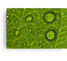 Water Drops on Leaf Canvas Print