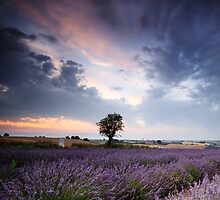 Lavender dream by Matteo Colombo