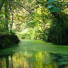 The Lake by Antoinette B