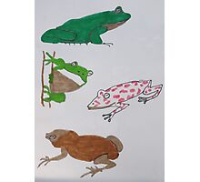 Colorful Frogs. Photographic Print