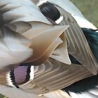 Mallard Duck Feathers 06 by Magic-Moments