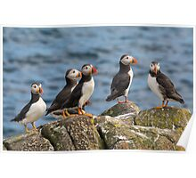 Puffins Poster