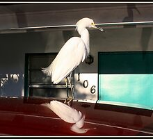 Motel Egret by Mikell Herrick